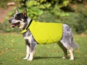 Insect Shield® refleksvest hund